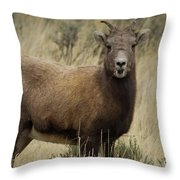 Big Horn Ewe-signed-#7480 Throw Pillow