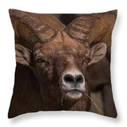 Big Horn Grazing Throw Pillow