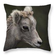Big Horn Lamb Throw Pillow