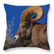 Big Horn Looking Down Throw Pillow