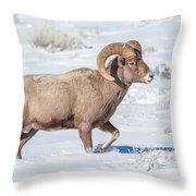 Big-horn Ram In Winter Throw Pillow