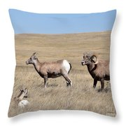 Big Horn Sheep Family Throw Pillow
