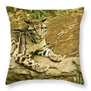 Big Kitty Cat Throw Pillow