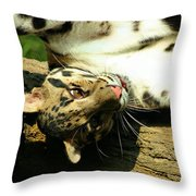 Big Kitty Fun Throw Pillow