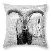 Big Moufflon Ram Throw Pillow