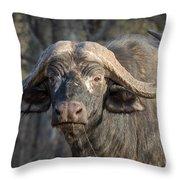 Big Old Bull Throw Pillow