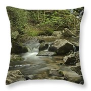Big Pup Falls 2 Throw Pillow