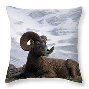 Big Ram Throw Pillow