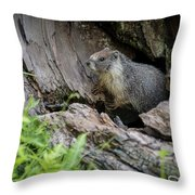 Big Tree Trail - Marmot - Sequoia National Park - California Throw Pillow