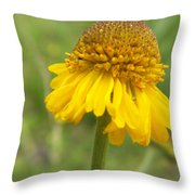 Bigelow Throw Pillow