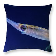 Bigfin Reef Squid Throw Pillow