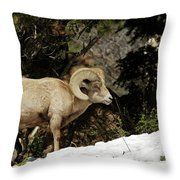 Bighorn In The Rockies Throw Pillow