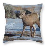 Bighorn Lamb 2 Throw Pillow