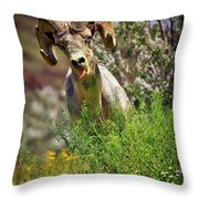 Bighorn Sheep And Wildflowers In Anza Borrego Desert State Park Throw Pillow by Sam Antonio Photography