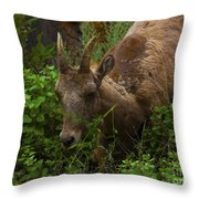 Bighorn Sheep Throw Pillow by Barbara Schultheis