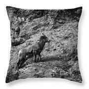Bighorn Sheep Ewe On Wolf Creek Pass Throw Pillow