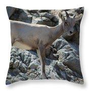 Bighorn Sheep Lamb Throw Pillow