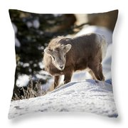 Bighorned Yearling - King Of The Hill Throw Pillow