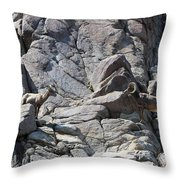 Bighorns Romantic Stare Throw Pillow