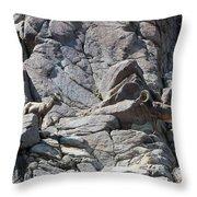 Bighorns Romantic Stare Throw Pillow