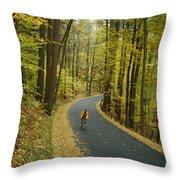 Biker On Road Amidst Fall Foliage Throw Pillow