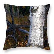Birch Autumn 3 Throw Pillow by Ron Day