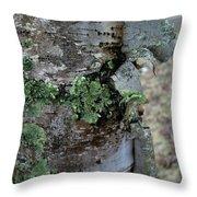 Birch Bark 1 Throw Pillow