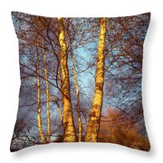 Birch Tree In Golden Hour Throw Pillow