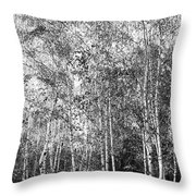 Birch Trees1 Throw Pillow