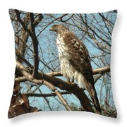 Birched Cooper 2 Throw Pillow