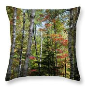 Birches In Fall Forest Throw Pillow