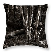 Birches In The Wood Throw Pillow