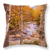 Birches On The Kancamagus Highway Throw Pillow