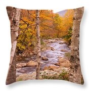 Birches On The Kancamagus Highway Throw Pillow