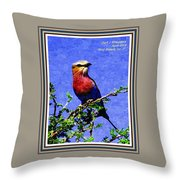 Bird Beauty - No. 7 P A With Decorative Ornate Printed Frame. Throw Pillow