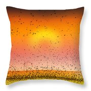 Bird Land Fine Art Color Photography Print Throw Pillow