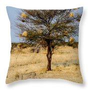 Bird Nests And A Cheetah Throw Pillow