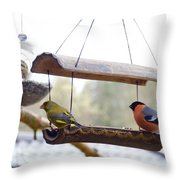Bird Of Europe.norway Throw Pillow