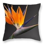 Bird Of Paradise #3 Throw Pillow