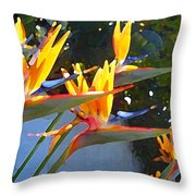 Bird Of Paradise Backlit By Sun Throw Pillow