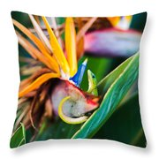 Bird Of Paradise Gecko Throw Pillow