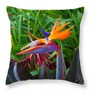 Bird Of Paradise Kalon Throw Pillow