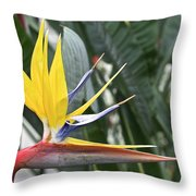 Bird Of Paradise Longwood Gardens Throw Pillow