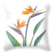 Bird Of Paradize Flowers Throw Pillow