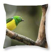 Bird Of Peru Throw Pillow
