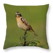 Bird On A Bush  Throw Pillow