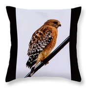 Bird On A Wire With Attitude Throw Pillow