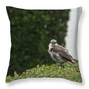 Bird On The Hedges Throw Pillow