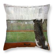 Bird Watching Kitty Cat Throw Pillow