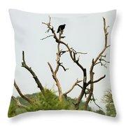 Bird011 Throw Pillow